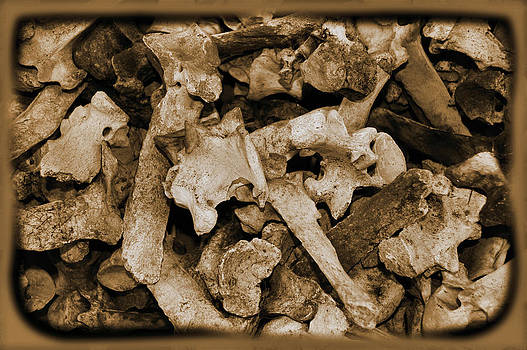 Cindy Nunn - Jumble of Bones