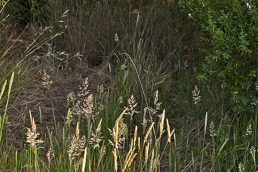 June Grass by Larry Darnell
