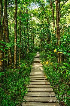 Jamie Pham - Jungle Walk