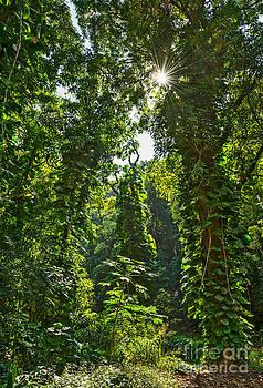 Jamie Pham - Jungles of Maui
