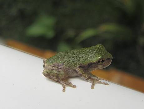Just a Little Guy by Christine Bradley
