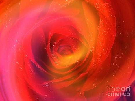Just A Rose by Zsuzsa Lado
