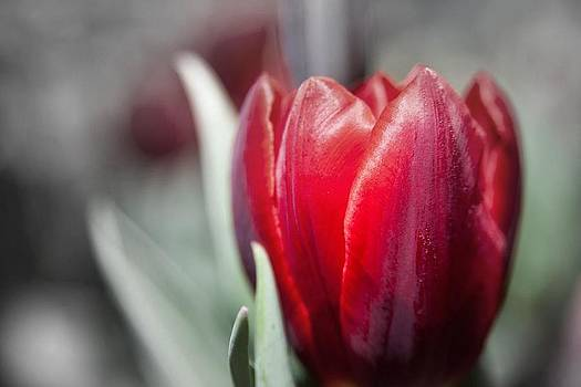 Just Bloomed by Naveed Ahmed
