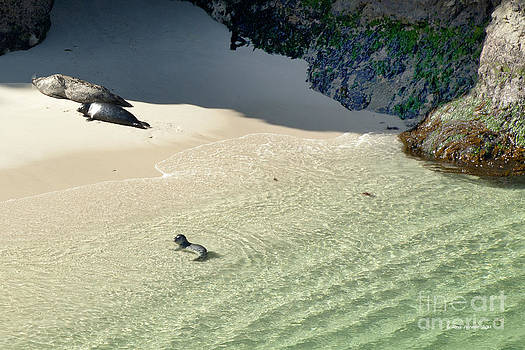 Artist and Photographer Laura Wrede - Just Born Baby Sea Lion Pup with Mom and Dad Napping on the Beach