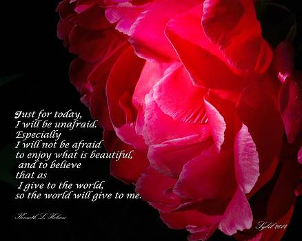 Just for today Rose by Sybil Conley