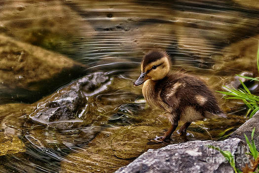 Just Getting My Feet Wet by Julie Palyswiat