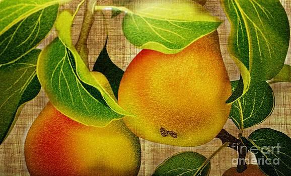 Just Pears by Judy Palkimas