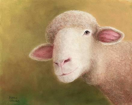 Just Sheep by Sharon Challand