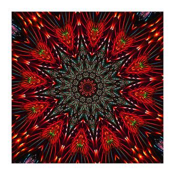 Kaleido Red Bugs by Ck Gandhi