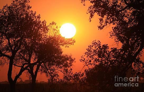 Kansas Golden Sunset with trees by Robert D  Brozek