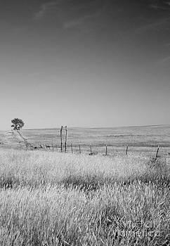 Kansas Prairie by Betty Morgan