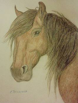 Kathy's Horse by Christy Saunders Church