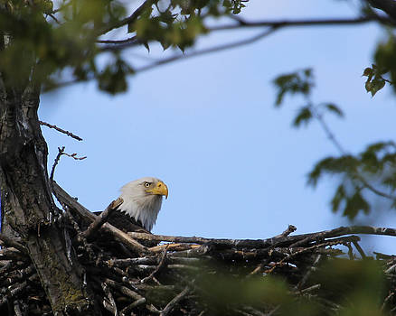 Keeping guard by Bruce  Morrell