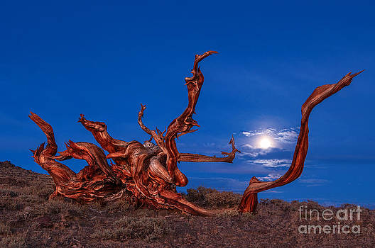 Jamie Pham - Keeping Time - Moonrise view of the Ancient Bristlecone Pine Forest.