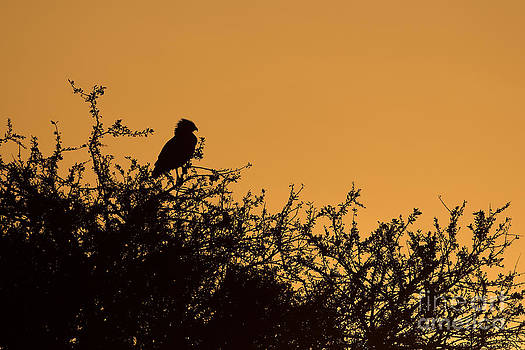 Kenyan Sunrise by Ashley Vincent