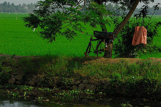 Kerala Still Life by Stefan Carpenter
