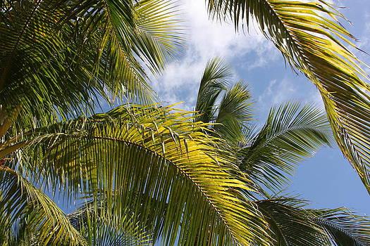 Key West Palms by Michael Smith