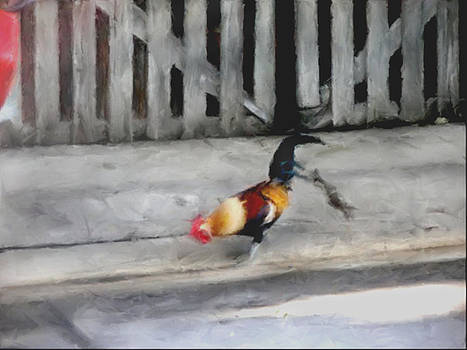 Keywest Florida Rooster by Judy Paleologos