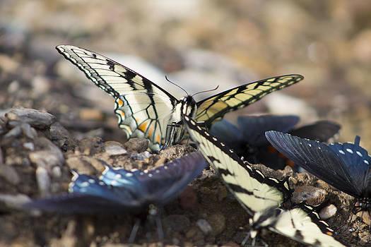 King Butterfly by Teresa Wissen