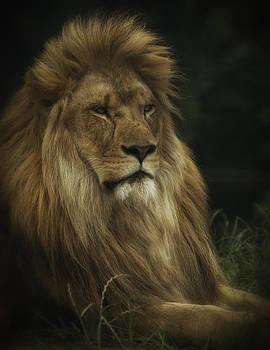 King by Chris Boulton