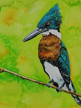 King Fisher 2 by Scott  Parker