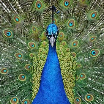 King of Birds by Rosie Schneider