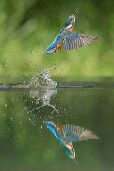 Kingfisher by Andy Astbury