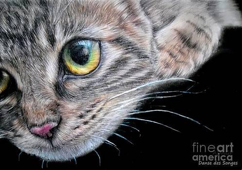 Kitten  by Danse DesSonges