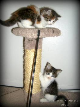 Kitten Fun by Terri K Designs