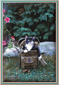 Kitten in a Canvas Bag by Patricia Keller