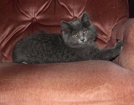 Tony Weatherman - Kitten