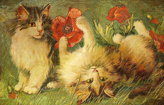 Pamela Phelps - Kittens and Poppies