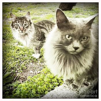 Kittens by Greetje Kamps