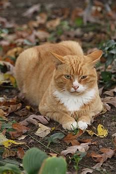 Kitty Cat  by Brad Fuller