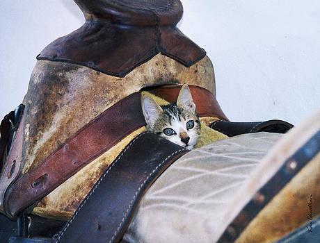 Kae Cheatham - Kitty in the Saddle