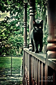 Kitty Stalker by Kelly Efstathiou