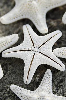 Knobby starfish bottom by Cynthia Holling-Morris