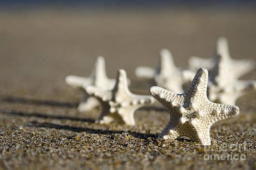 Knobby starfish by Cynthia Holling-Morris