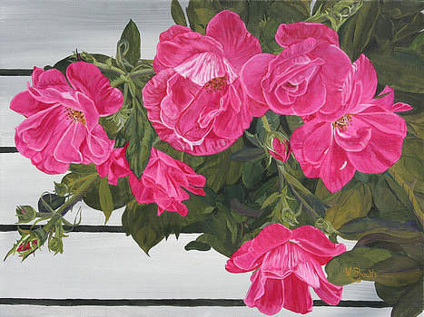 Knock Out Roses by Wendy Shoults