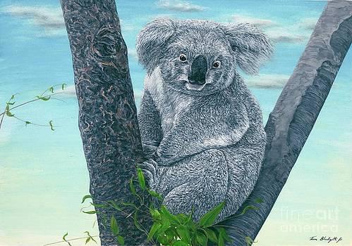 Koala by Tom Blodgett Jr