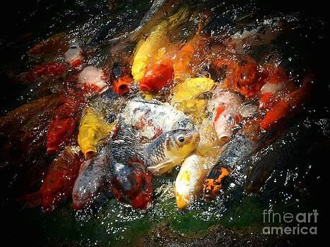 Koi Fish  by Rita H Ireland