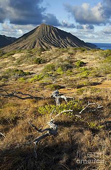 Charmian Vistaunet - Koko Crater and Tree Snag