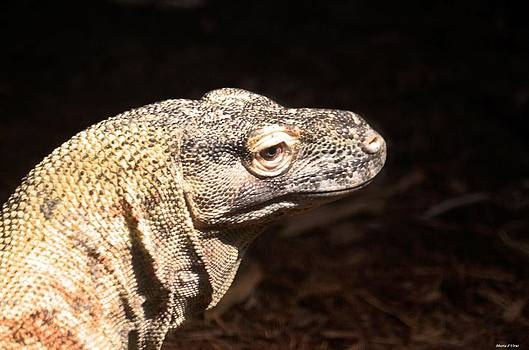Maria Urso  - Komodo Dragon