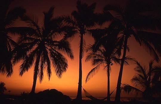 Kona Paradise palms by Dave  Abreu
