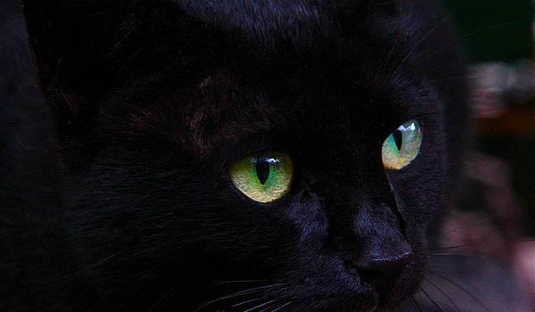 Kopinto Cat Eyes by Graham Hayward