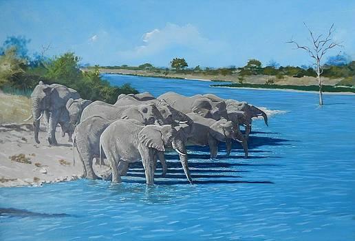 Kruger Elephants by Robert Teeling