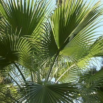 Gilbert Artiaga - La Palm 1