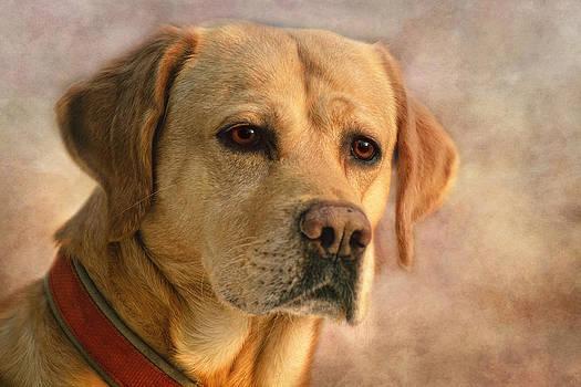 Labrador by Claudia Moeckel