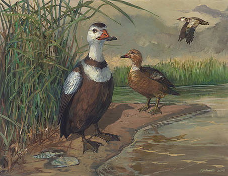 Labrador Duck by ACE Coinage painting by Michael Rothman