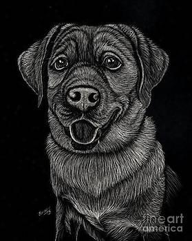 Labrador Scratch by Jennifer Jeffris
